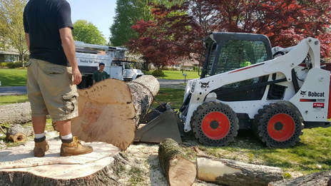 Tree Removal Service Green Bay, WI