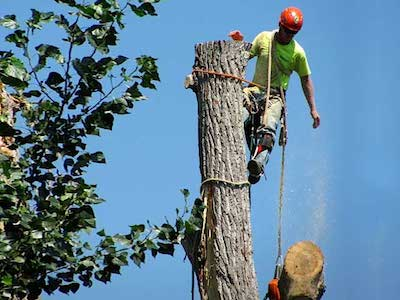 Tree Removal | Tree Service Green Bay