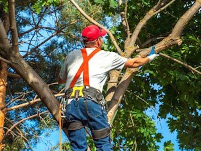 Tree Service Green Bay | Tree Trimming